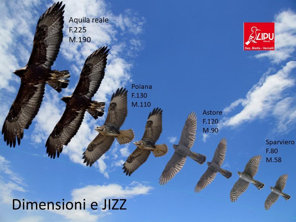 Riconoscimento degli uccelli
